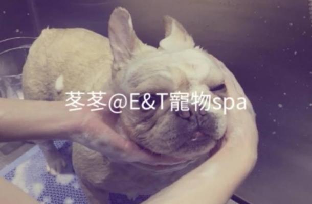 E&T Pet Spa
